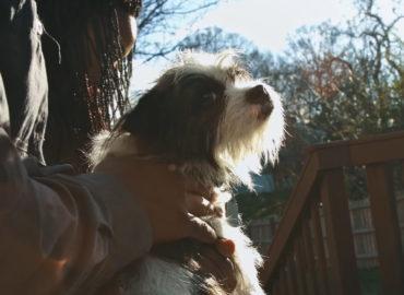 Chụp ảnh cho thú cưng hay chụp ảnh cho bé – những điều bạn cần biết