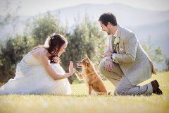 Kinh nghiệm để chụp bộ ảnh cưới hoàn hảo dành cho cô dâu và chú rể từ A đến Z